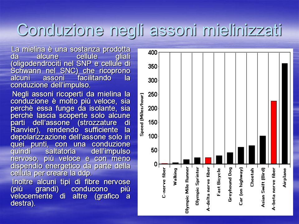 Conduzione negli assoni mielinizzati