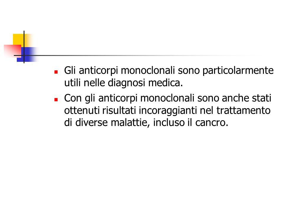 Gli anticorpi monoclonali sono particolarmente utili nelle diagnosi medica.