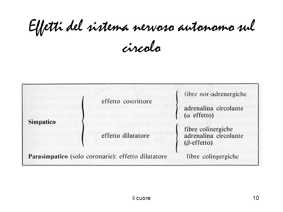 Effetti del sistema nervoso autonomo sul circolo