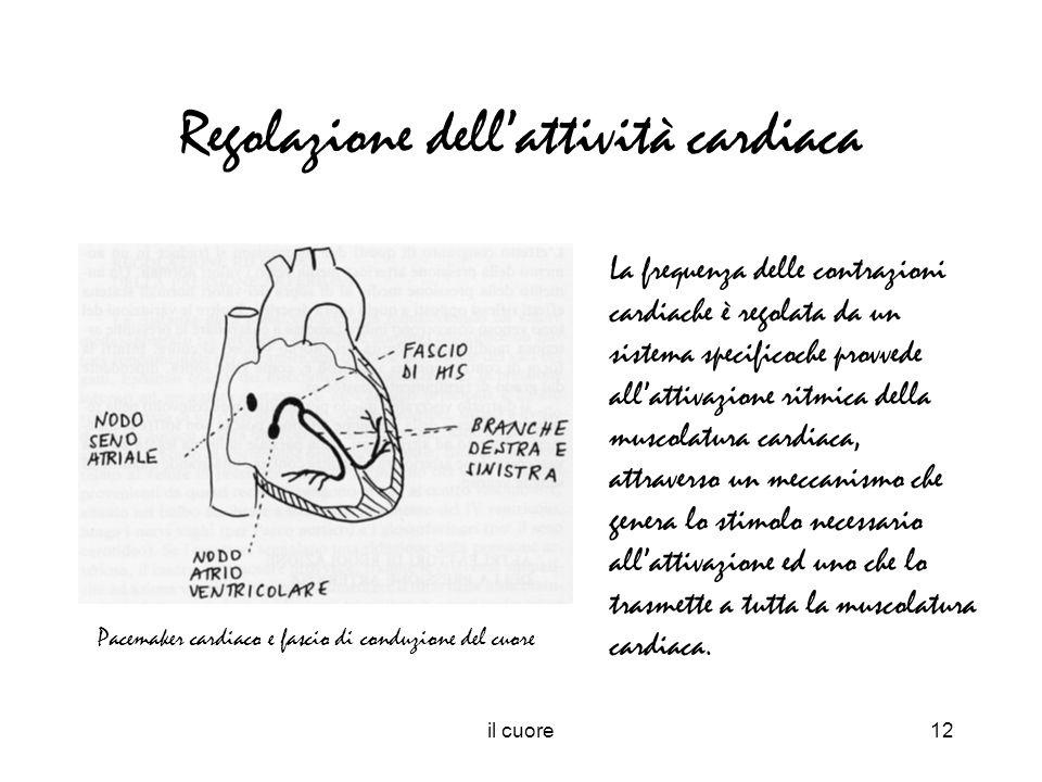 Regolazione dell'attività cardiaca