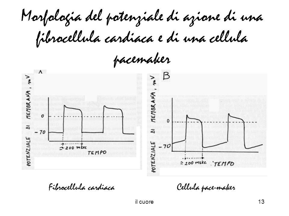 Morfologia del potenziale di azione di una fibrocellula cardiaca e di una cellula pacemaker