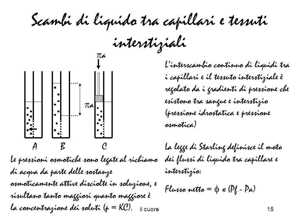 Scambi di liquido tra capillari e tessuti interstiziali