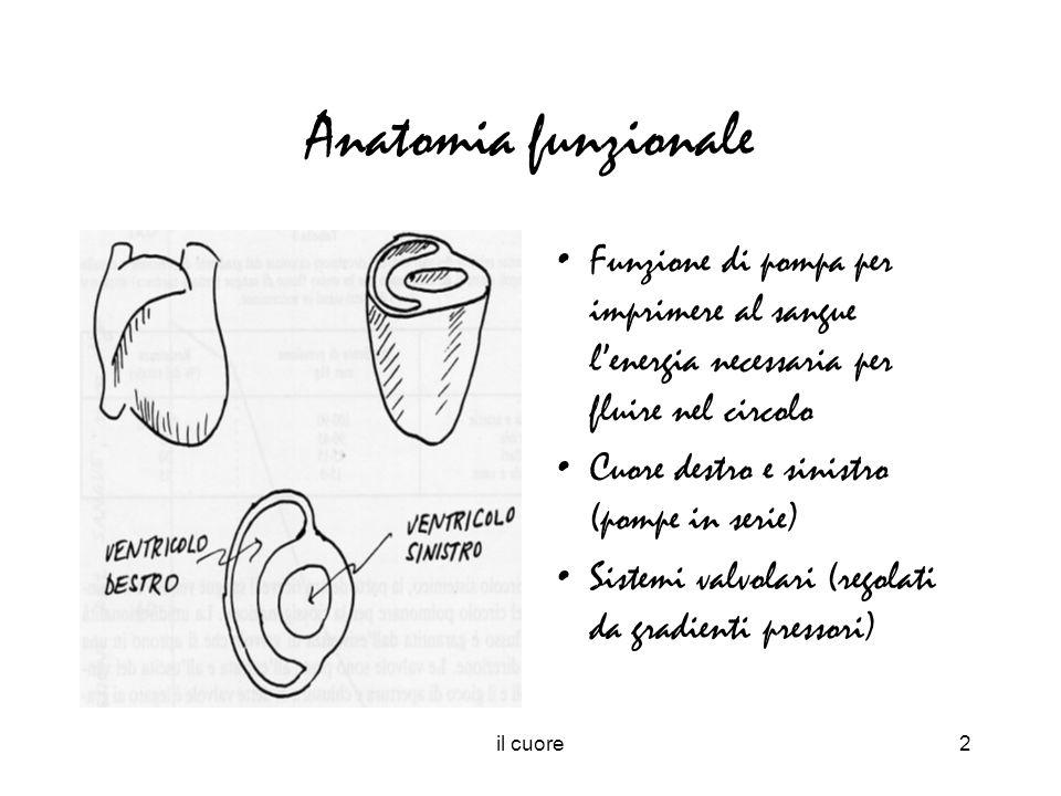 Anatomia funzionale Funzione di pompa per imprimere al sangue l'energia necessaria per fluire nel circolo.