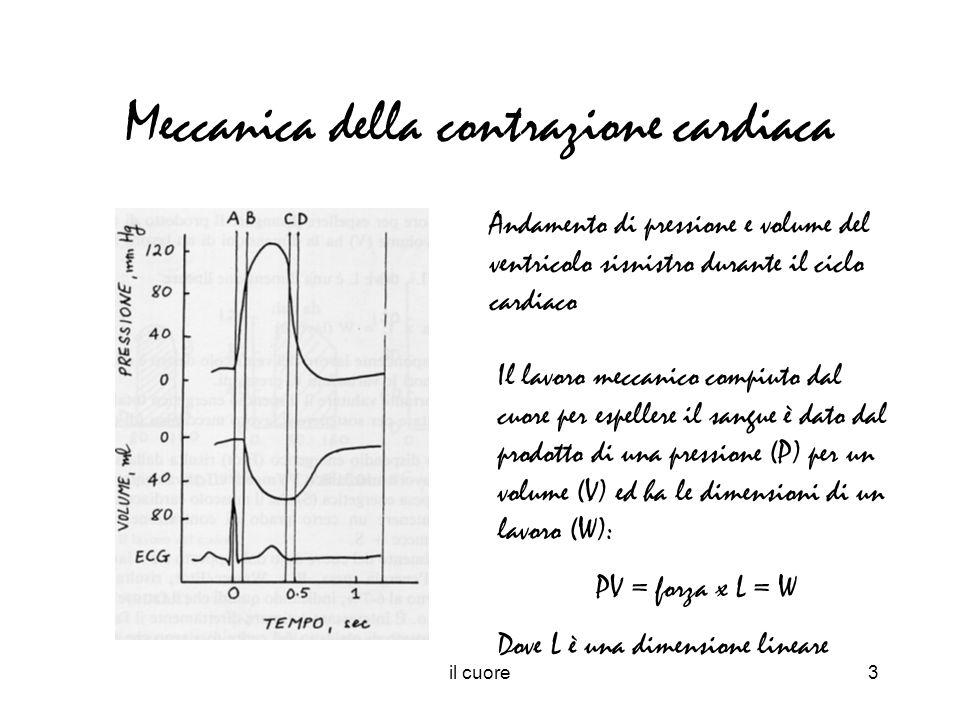 Meccanica della contrazione cardiaca