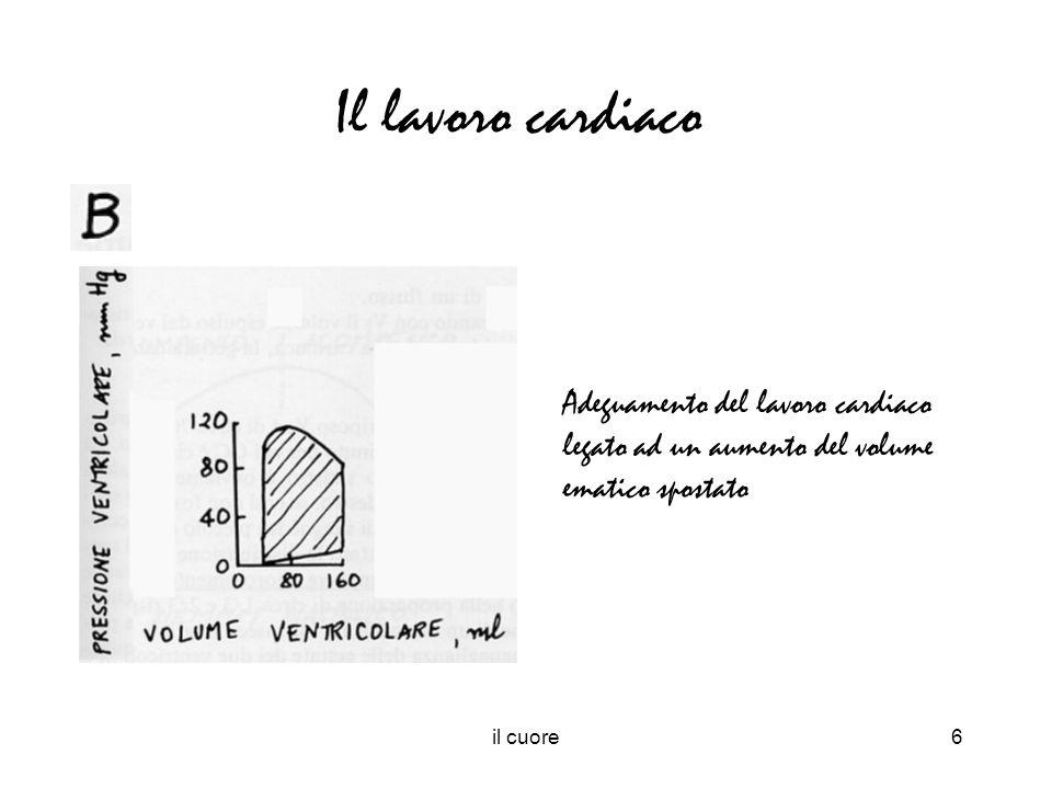 Il lavoro cardiaco Adeguamento del lavoro cardiaco legato ad un aumento del volume ematico spostato.