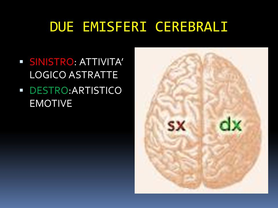 DUE EMISFERI CEREBRALI