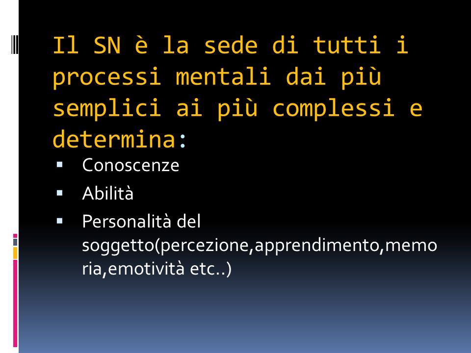 Il SN è la sede di tutti i processi mentali dai più semplici ai più complessi e determina: