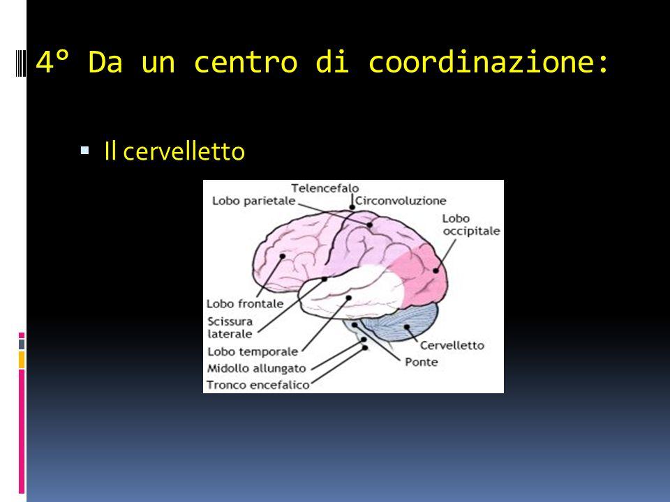 4° Da un centro di coordinazione: