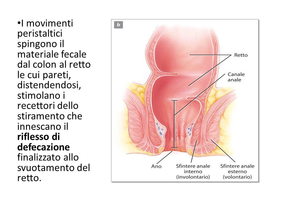 I movimenti peristaltici spingono il materiale fecale dal colon al retto le cui pareti, distendendosi, stimolano i recettori dello stiramento che innescano il riflesso di defecazione finalizzato allo svuotamento del retto.