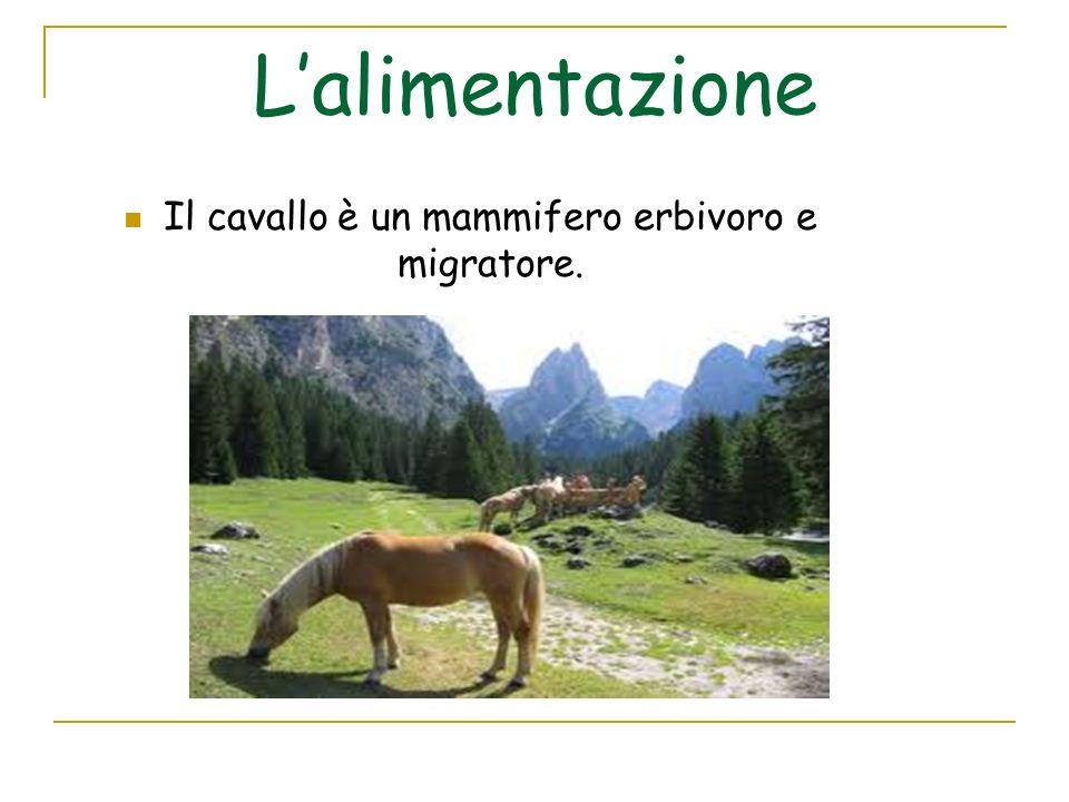 Il cavallo è un mammifero erbivoro e migratore.