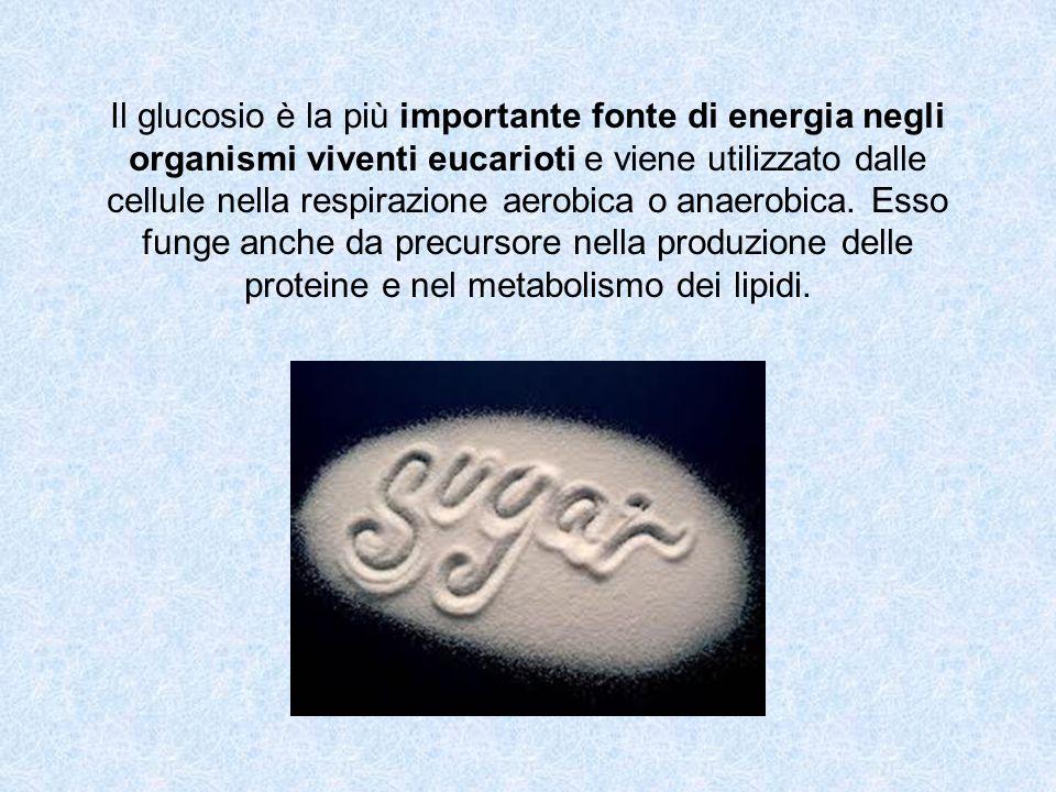 Il glucosio è la più importante fonte di energia negli organismi viventi eucarioti e viene utilizzato dalle cellule nella respirazione aerobica o anaerobica.