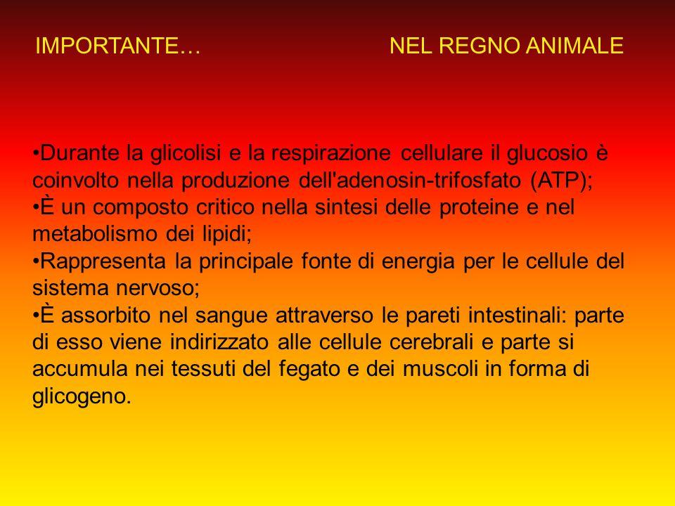 IMPORTANTE…NEL REGNO ANIMALE.