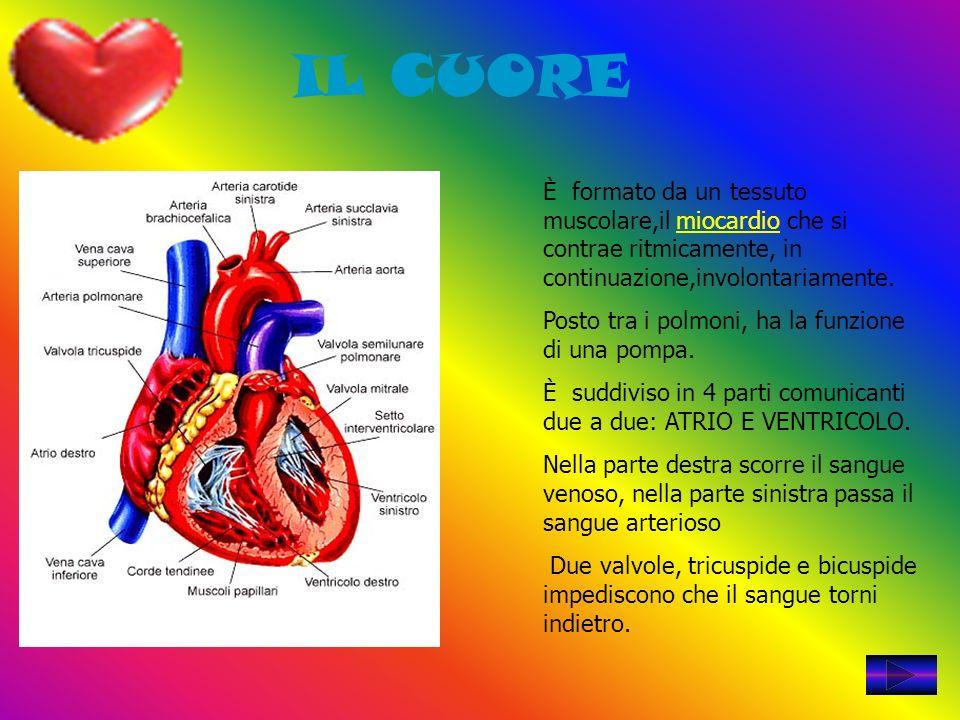 IL CUORE È formato da un tessuto muscolare,il miocardio che si contrae ritmicamente, in continuazione,involontariamente.