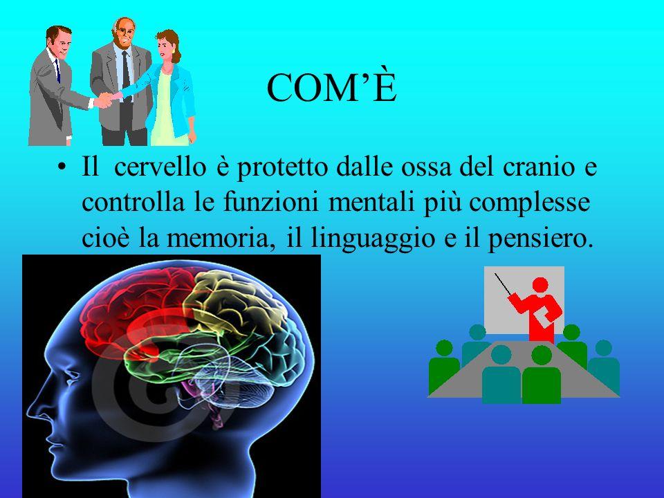 COM'È Il cervello è protetto dalle ossa del cranio e controlla le funzioni mentali più complesse cioè la memoria, il linguaggio e il pensiero.
