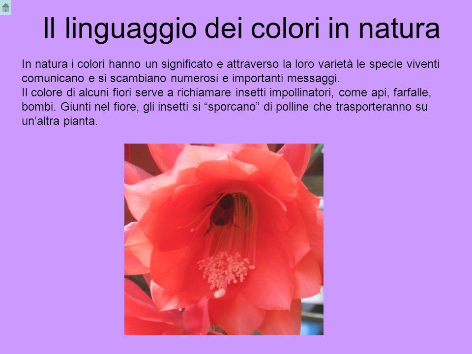 Il linguaggio dei colori in natura