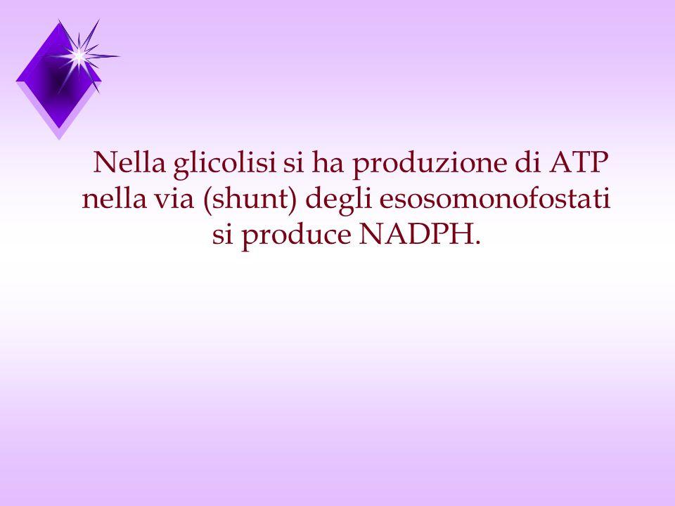 Nella glicolisi si ha produzione di ATP
