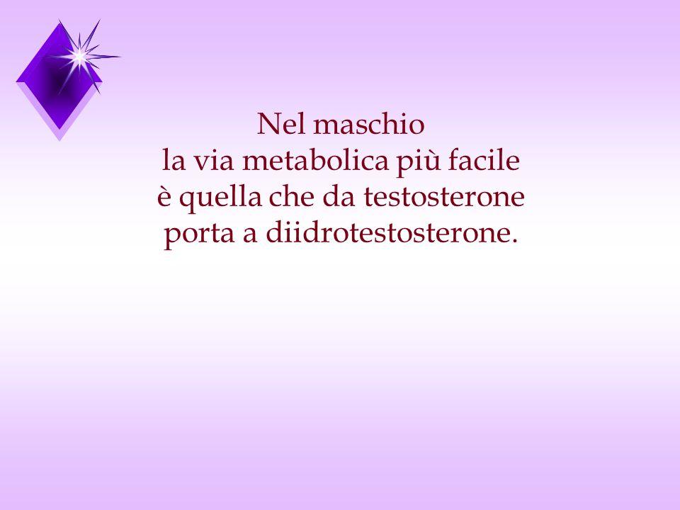 la via metabolica più facile è quella che da testosterone