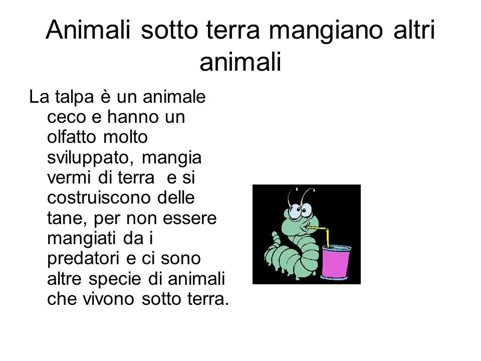 Animali sotto terra mangiano altri animali