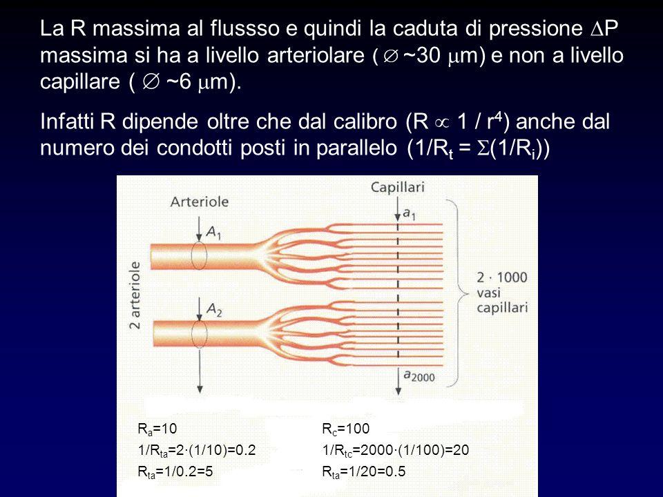 La R massima al flussso e quindi la caduta di pressione DP massima si ha a livello arteriolare (  ~30 mm) e non a livello capillare (  ~6 mm).
