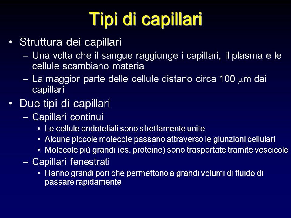 Tipi di capillari Struttura dei capillari Due tipi di capillari