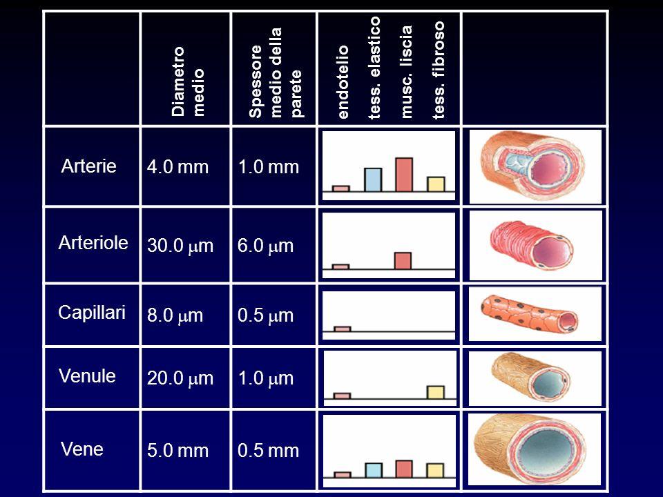 4.0 mm 1.0 mm 30.0 mm 6.0 mm 8.0 mm 0.5 mm 20.0 mm 5.0 mm Arterie