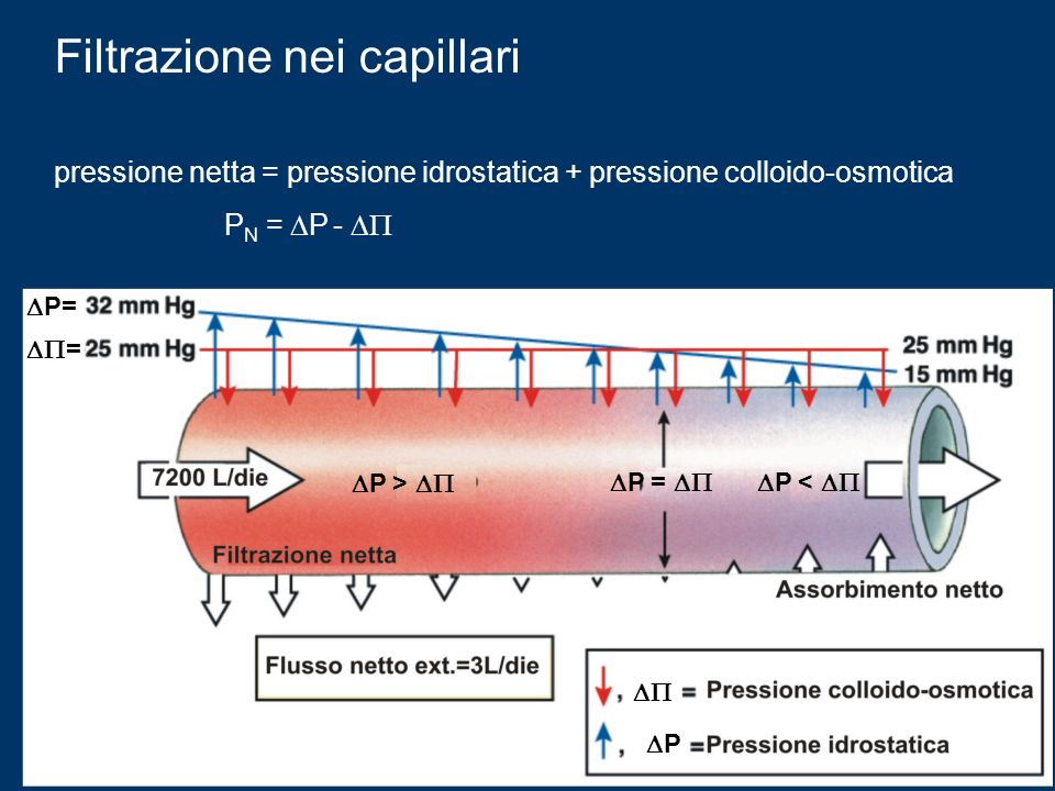 Filtrazione nei capillari