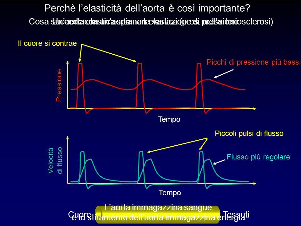 Perchè l'elasticità dell'aorta è così importante
