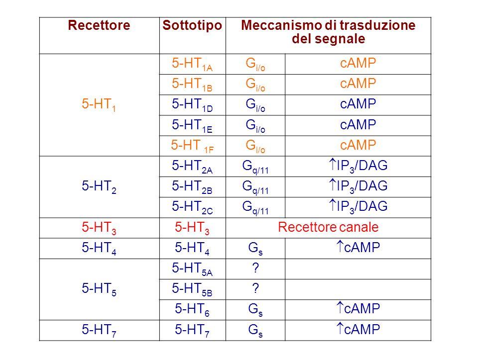 Meccanismo di trasduzione