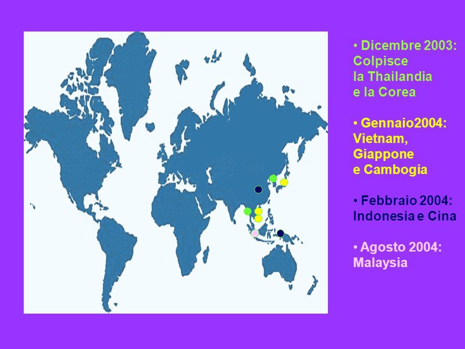 Dicembre 2003: Colpisce. la Thailandia. e la Corea. Gennaio2004: Vietnam, Giappone. e Cambogia.