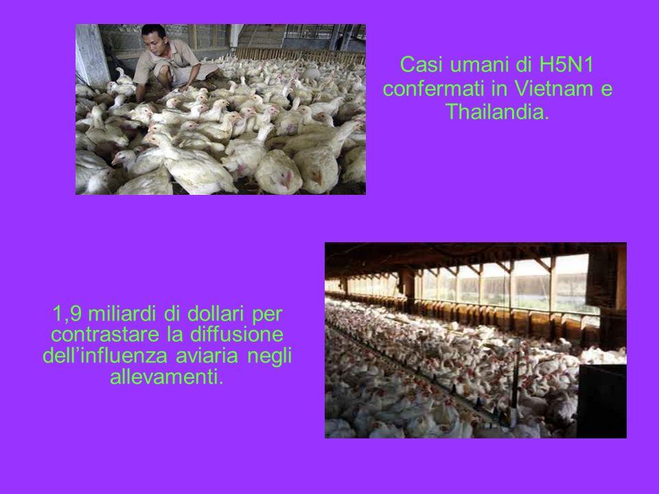 Casi umani di H5N1 confermati in Vietnam e Thailandia.