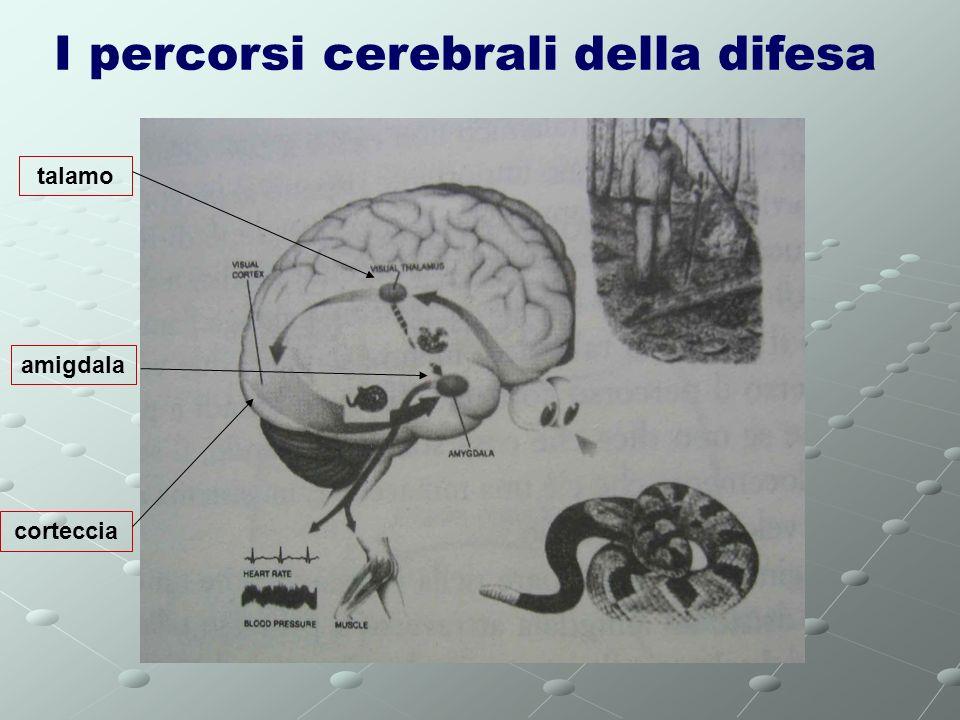 I percorsi cerebrali della difesa