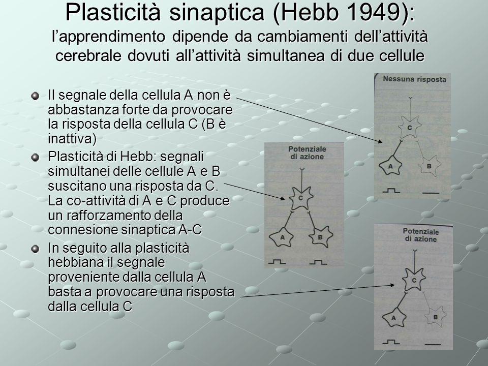 Plasticità sinaptica (Hebb 1949): l'apprendimento dipende da cambiamenti dell'attività cerebrale dovuti all'attività simultanea di due cellule