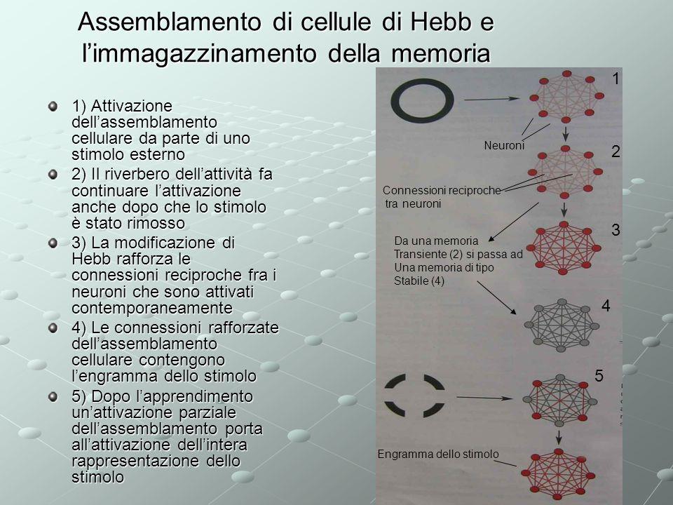 Assemblamento di cellule di Hebb e l'immagazzinamento della memoria
