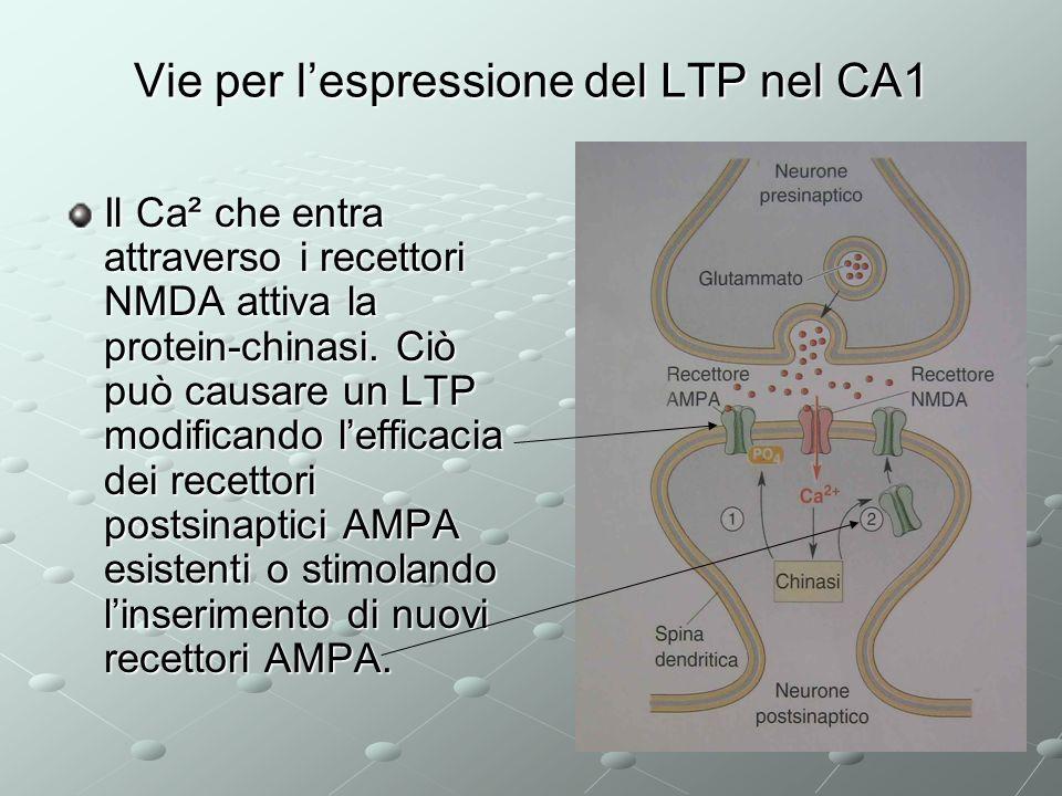 Vie per l'espressione del LTP nel CA1
