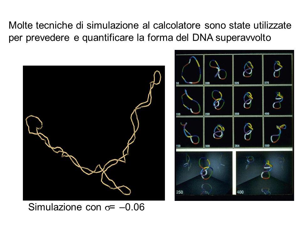 Molte tecniche di simulazione al calcolatore sono state utilizzate per prevedere e quantificare la forma del DNA superavvolto
