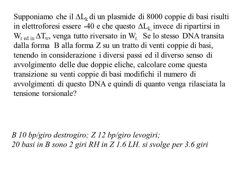 Supponiamo che il ∆Lk di un plasmide di 8000 coppie di basi risulti in elettroforesi essere -40 e che questo ∆Lk, invece di ripartirsi in Wr ed in ∆Tw, venga tutto riversato in Wr. Se lo stesso DNA transita dalla forma B alla forma Z su un tratto di venti coppie di basi, tenendo in considerazione i diversi passi ed il diverso senso di avvolgimento delle due doppie eliche, calcolare come questa transizione su venti coppie di basi modifichi il numero di avvolgimenti di questo DNA e quindi di quanto venga rilasciata la tensione torsionale
