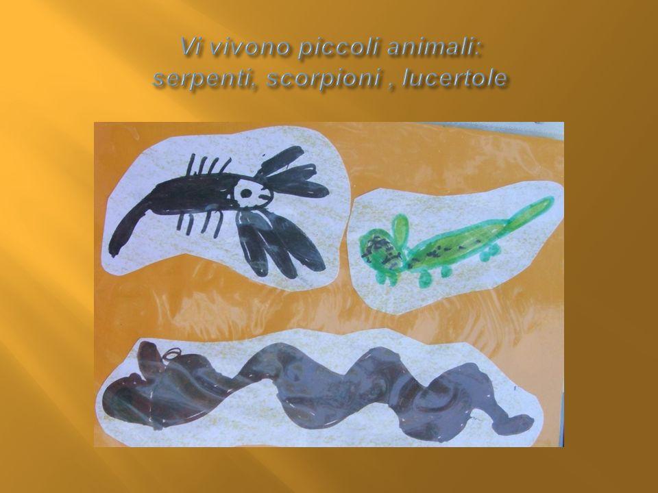 Vi vivono piccoli animali: serpenti, scorpioni , lucertole