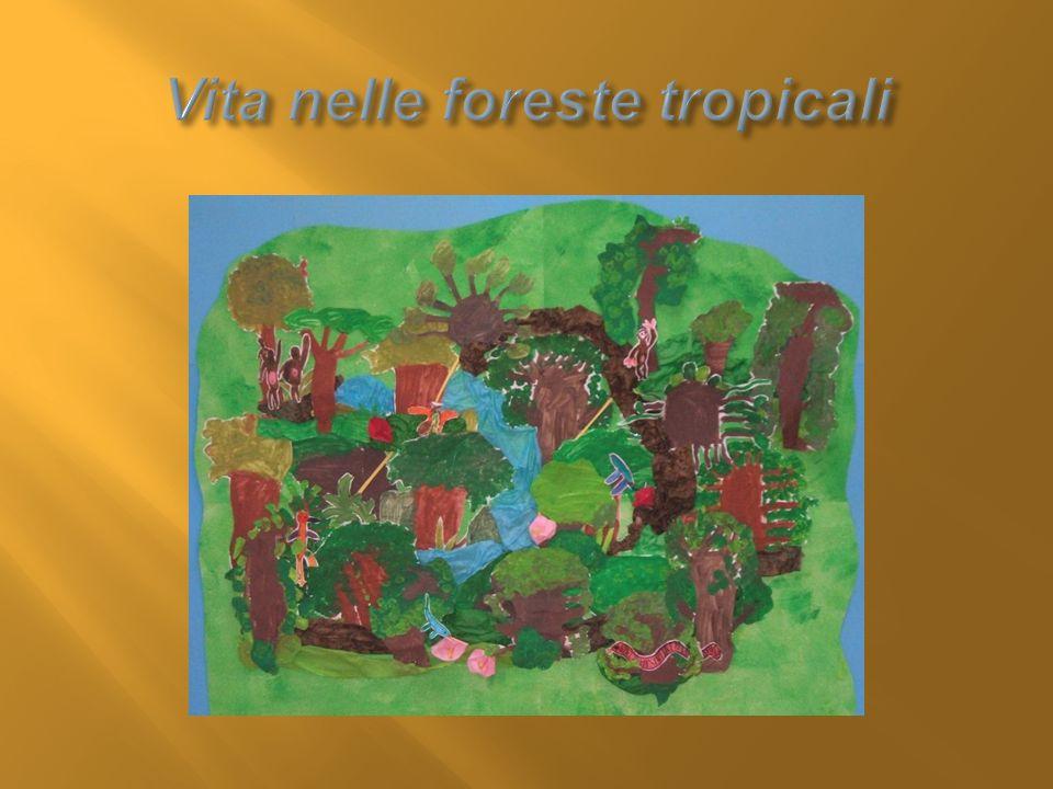 Vita nelle foreste tropicali