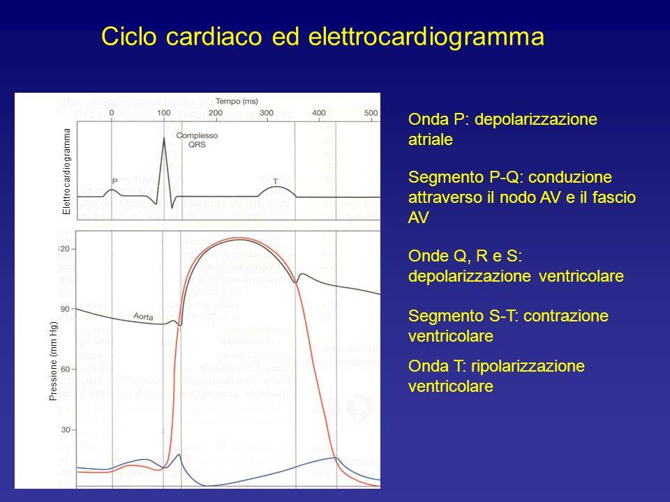 Ciclo cardiaco ed elettrocardiogramma