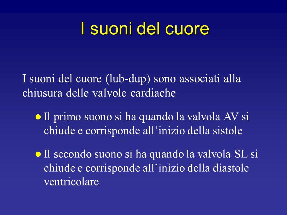 I suoni del cuore I suoni del cuore (lub-dup) sono associati alla chiusura delle valvole cardiache.
