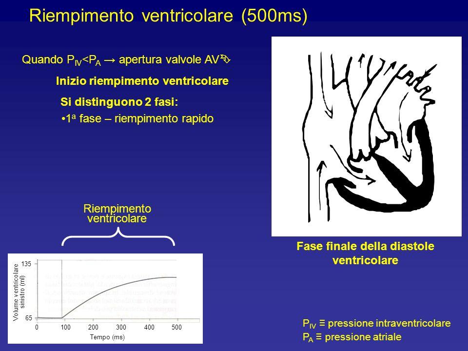 Fase finale della diastole ventricolare
