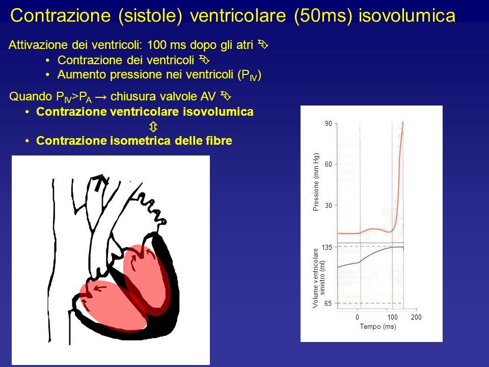 Volume ventricolare sinistro (ml)