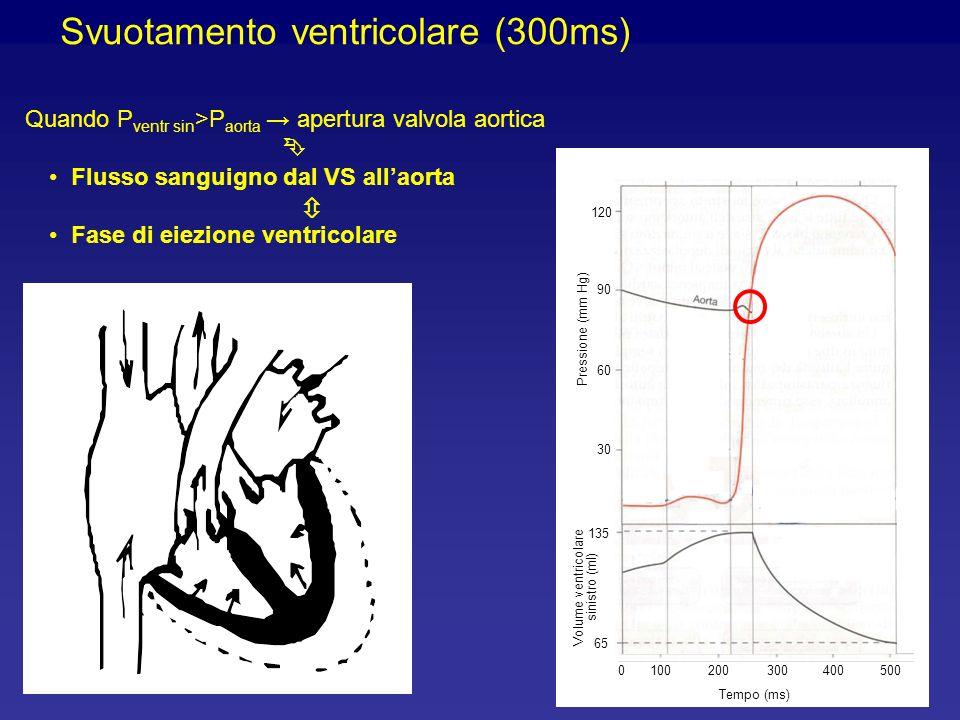 Svuotamento ventricolare (300ms)