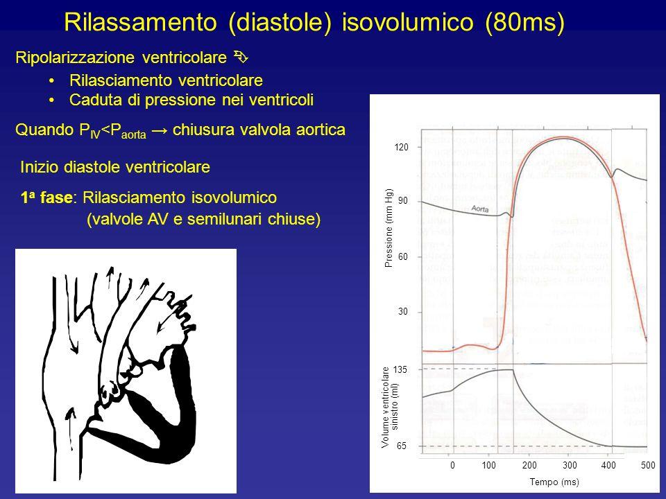 Rilassamento (diastole) isovolumico (80ms)