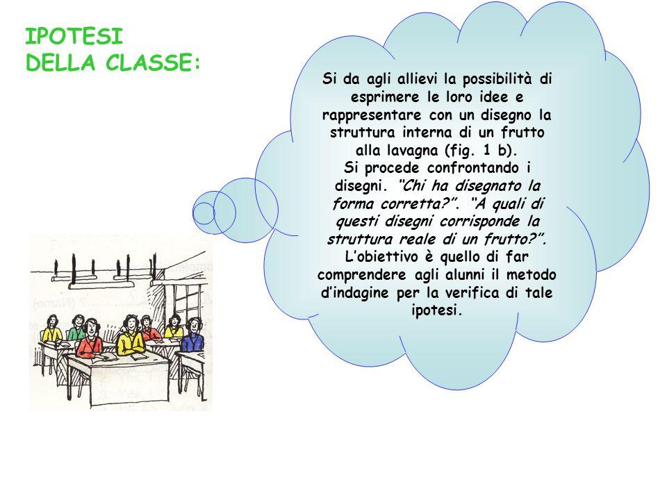Si da agli allievi la possibilità di esprimere le loro idee e rappresentare con un disegno la struttura interna di un frutto alla lavagna (fig. 1 b).