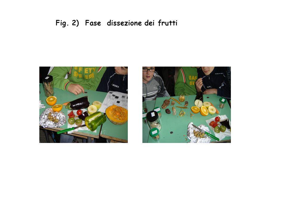 Fig. 2) Fase dissezione dei frutti