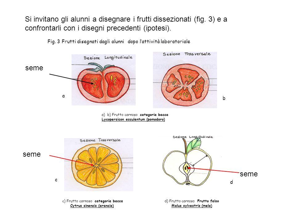 Si invitano gli alunni a disegnare i frutti dissezionati (fig