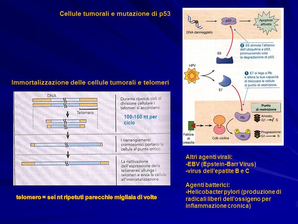 Cellule tumorali e mutazione di p53