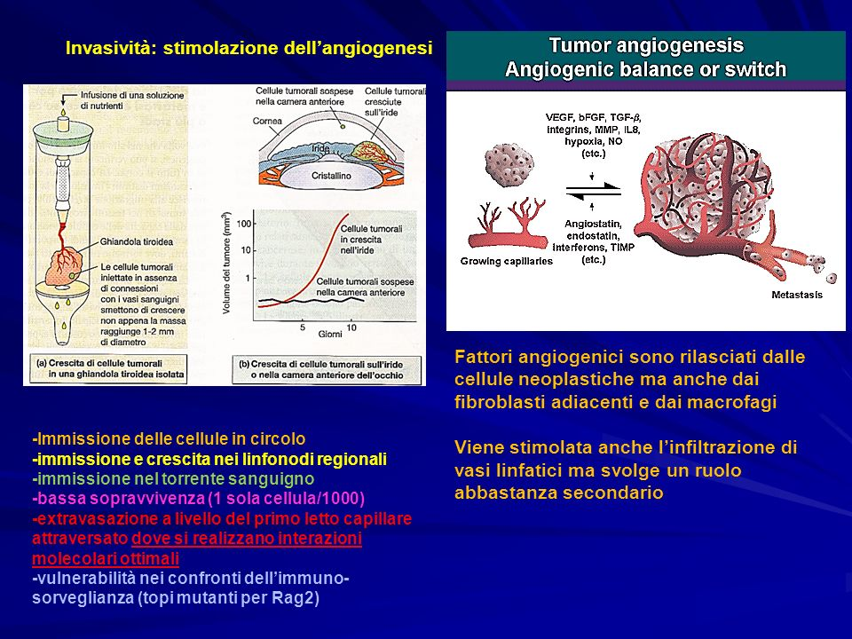 Invasività: stimolazione dell'angiogenesi