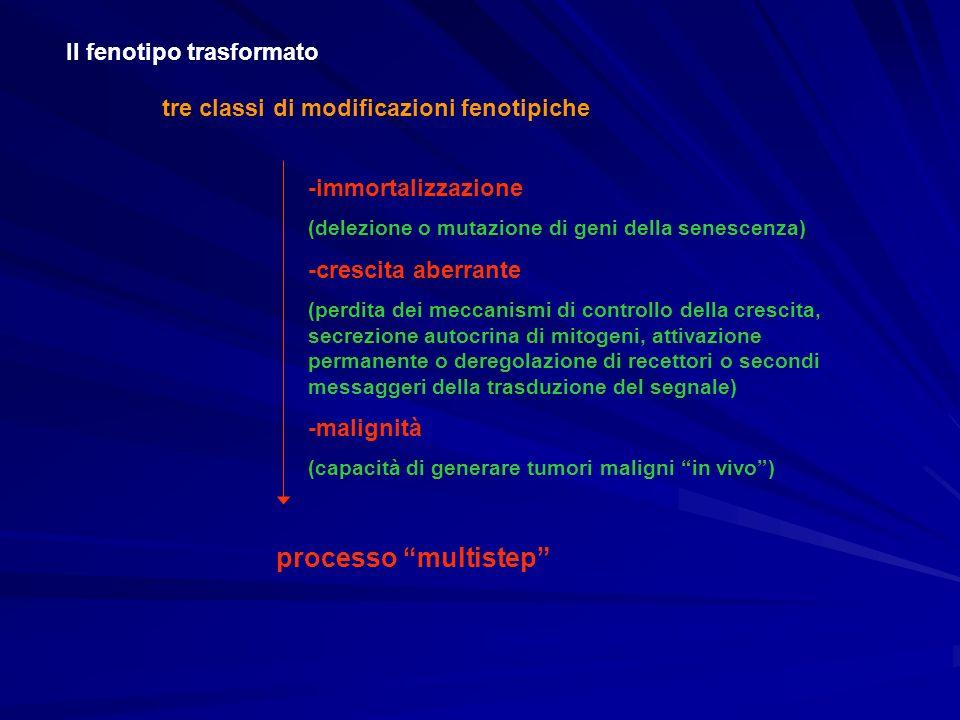 processo multistep Il fenotipo trasformato